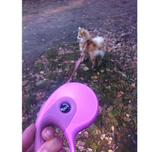 Retractable Automatic Dog Leash - 3/5 Metre (3 colours)