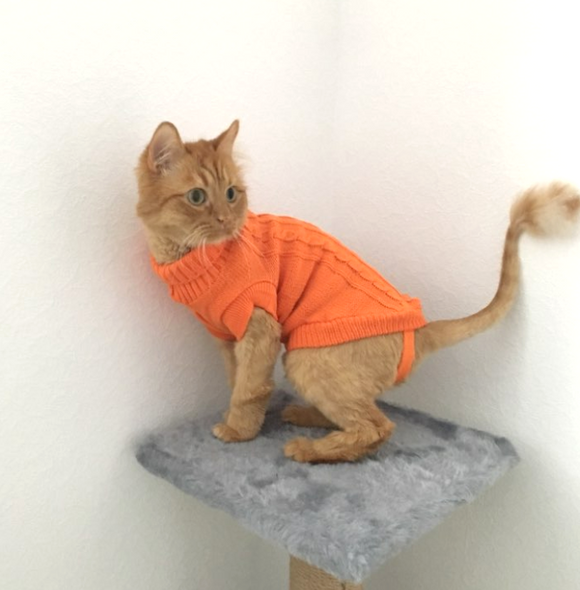 Cat Knit Sweater - Orange