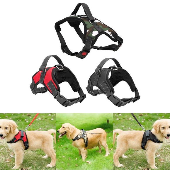 Dog Leash Collar for Walking Out (3 options)