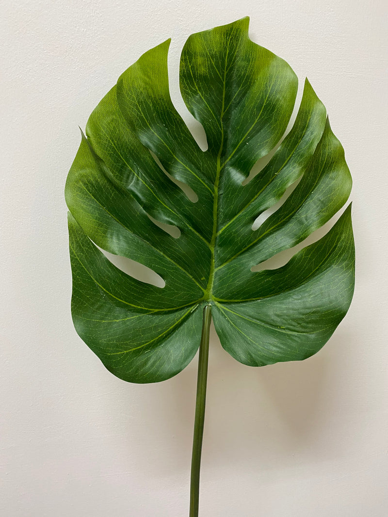 SPLIT PHILO LEAF