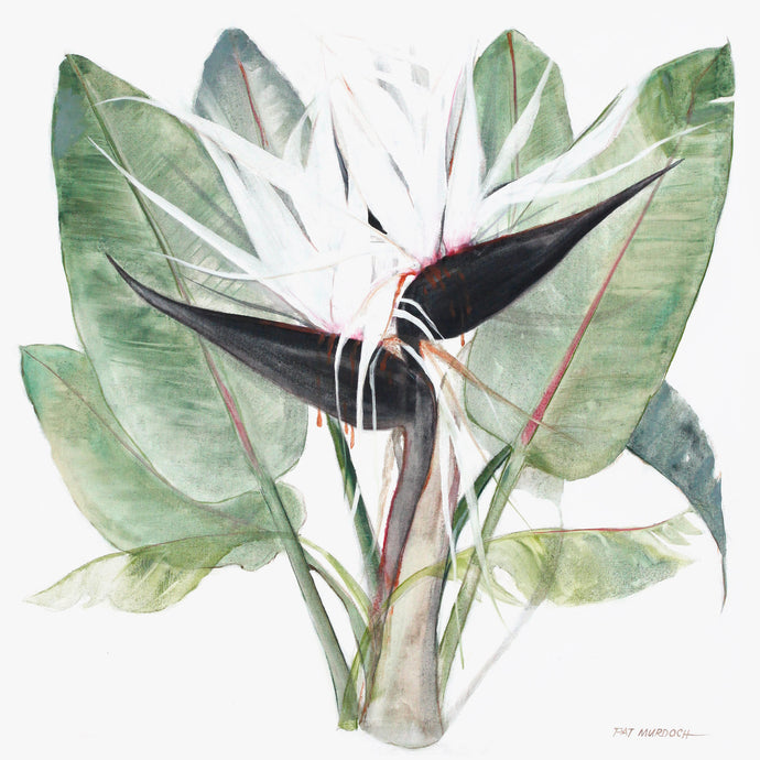 Black Strelitzia - original contemporary african art