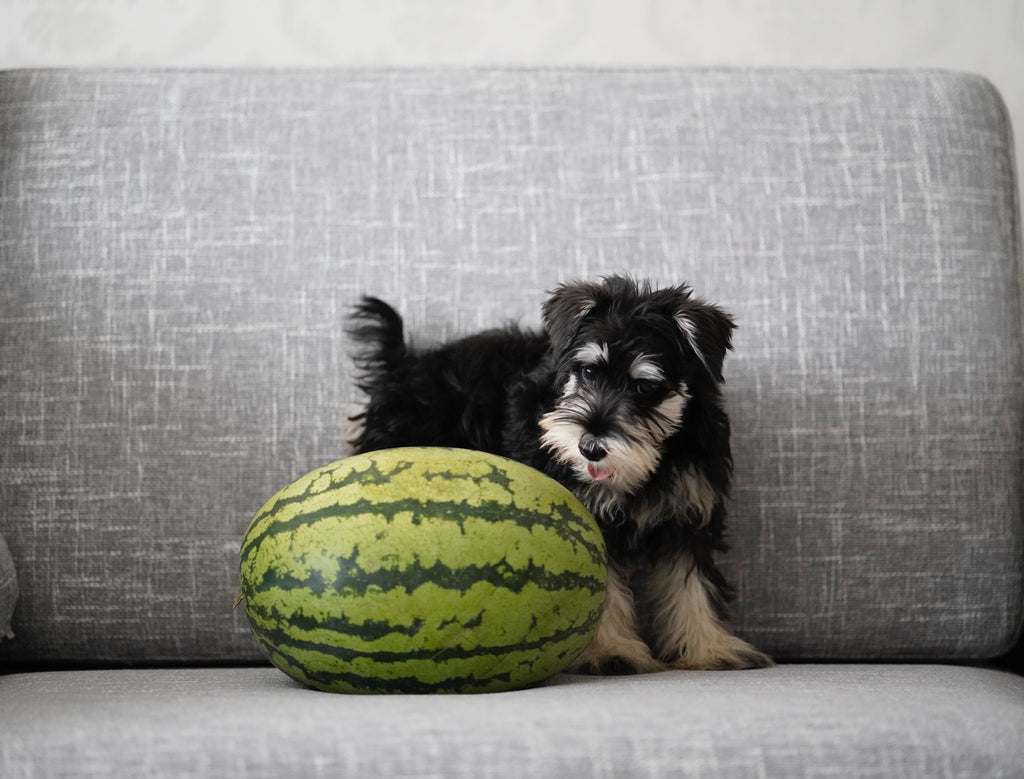 dog-and-watermelon