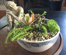 Load image into Gallery viewer, Succulent Arranging and Care with Diane Martell Landscape Design AM