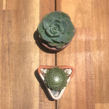 Load image into Gallery viewer, ONLINE - Succulent Pot Casting Workshop