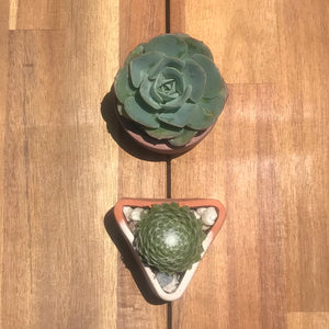 ONLINE - Succulent Pot Casting Workshop