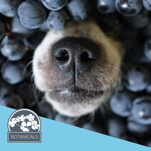 Fido's Nest Blog | Snouts and Scents and Shampoos, oh-my!