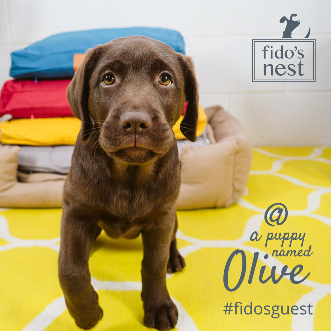 Fido's Nest | Introducing Olive the Fido's Nest puppy model