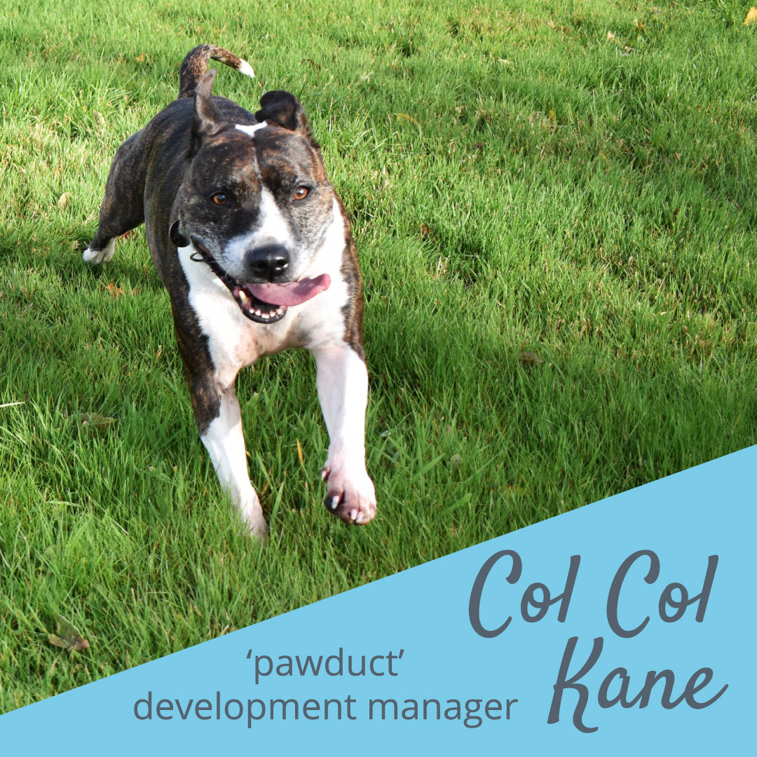 Fido's Nest | Introducing Colin Our Staffordshire Bull Terrier