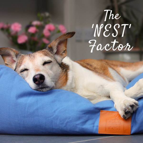 Lupo's Nest | Hypoallergenic Pillow Dog Bed in Periwinkle Blue