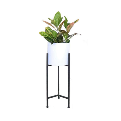 This is a product image of Blooming Free Standing Planter. It can be used as an Home Accessories.