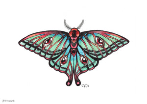 Moth in full color