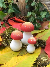 Magic toadstools - Cordelia's House of Treasures