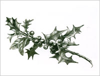 Seasonal - Holly Sprig