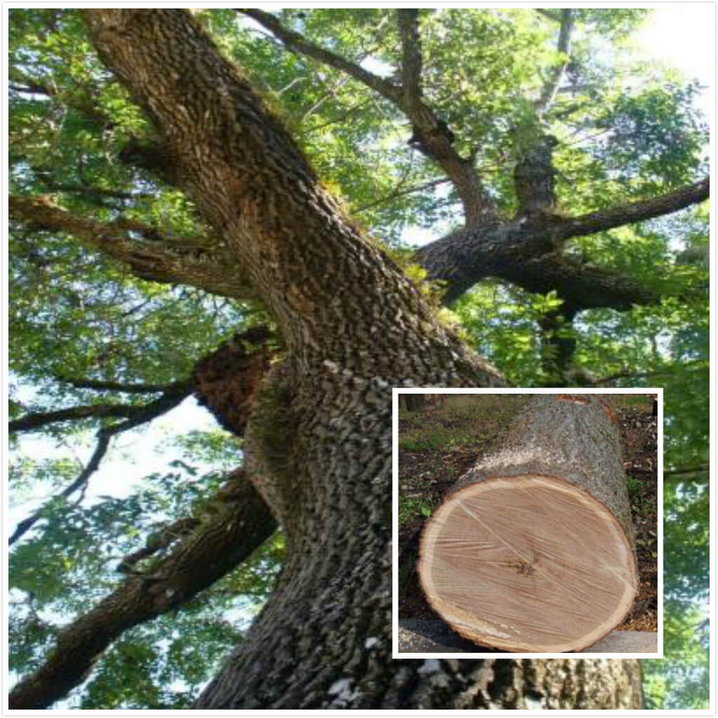What is Cherry Wood?