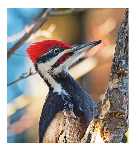 Image of Woodpecker