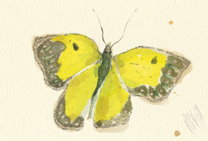 """Yellow Butterfly""  Extra Mini Signed Print"