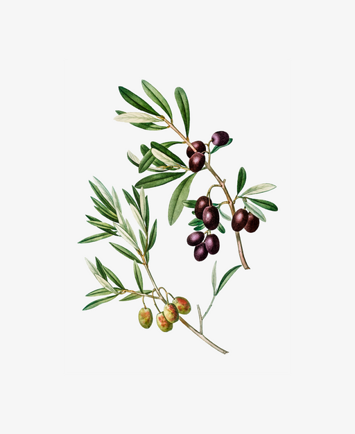 Green Olives with Leaves Poster