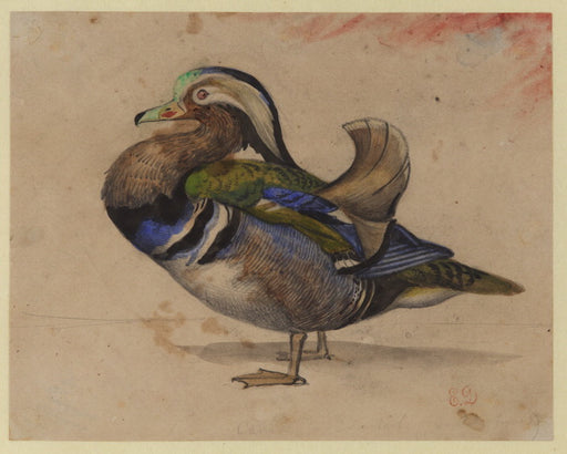 A Mandarin drake by Eugène Delacroix Reproduction Painting by Blue Surf Art