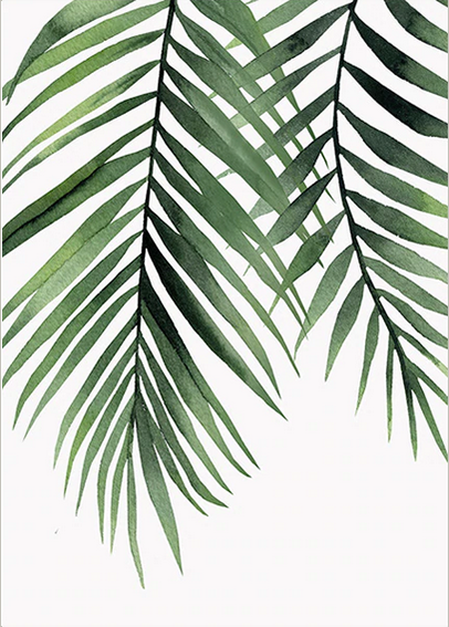 Tropical Plants - Coconut Leafs, Canvas Art Painting. Wall Art, Home Decor