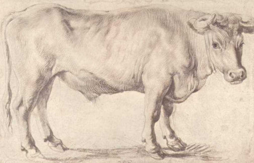 Bull by Peter Paul Rubens Reproduction Oil Painting on Canvas