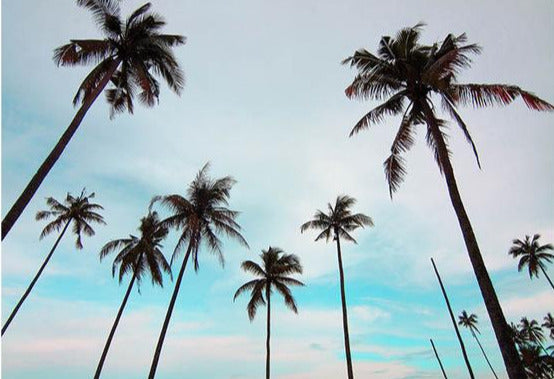 Palm trees picture of Summer Vibes Prints at Blue Surf Art