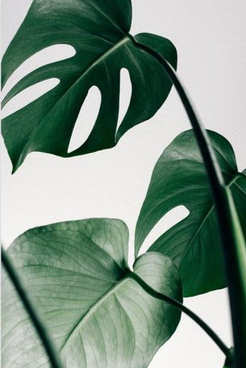 Tropical Leaf Wall Art Print on Canvas III