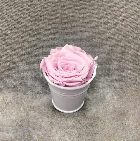 Beyoutiful Single Rose