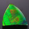 Green Fossilised Ammonite Gemstone 19.22 Carats