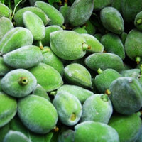 Fresh Green Almond (Choghaleh Badoom)
