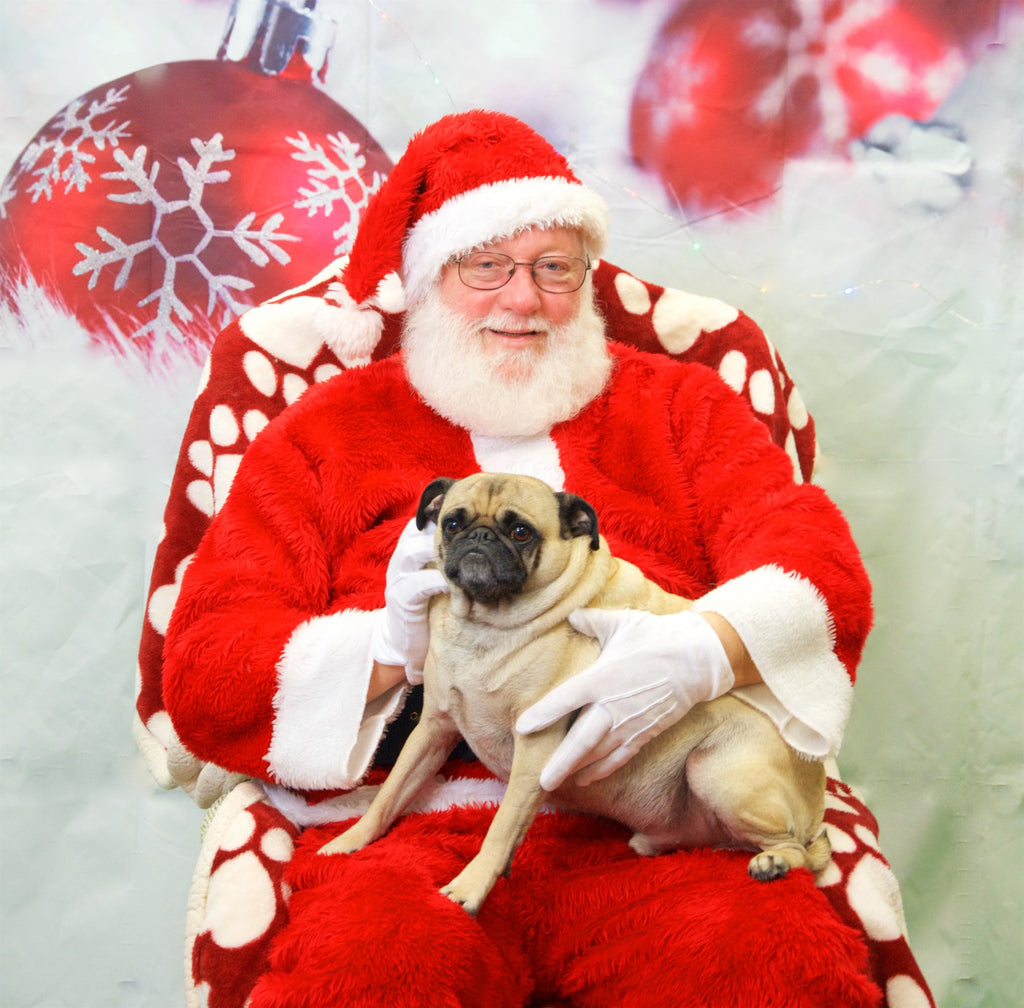 We Took Photos with Santa Paws