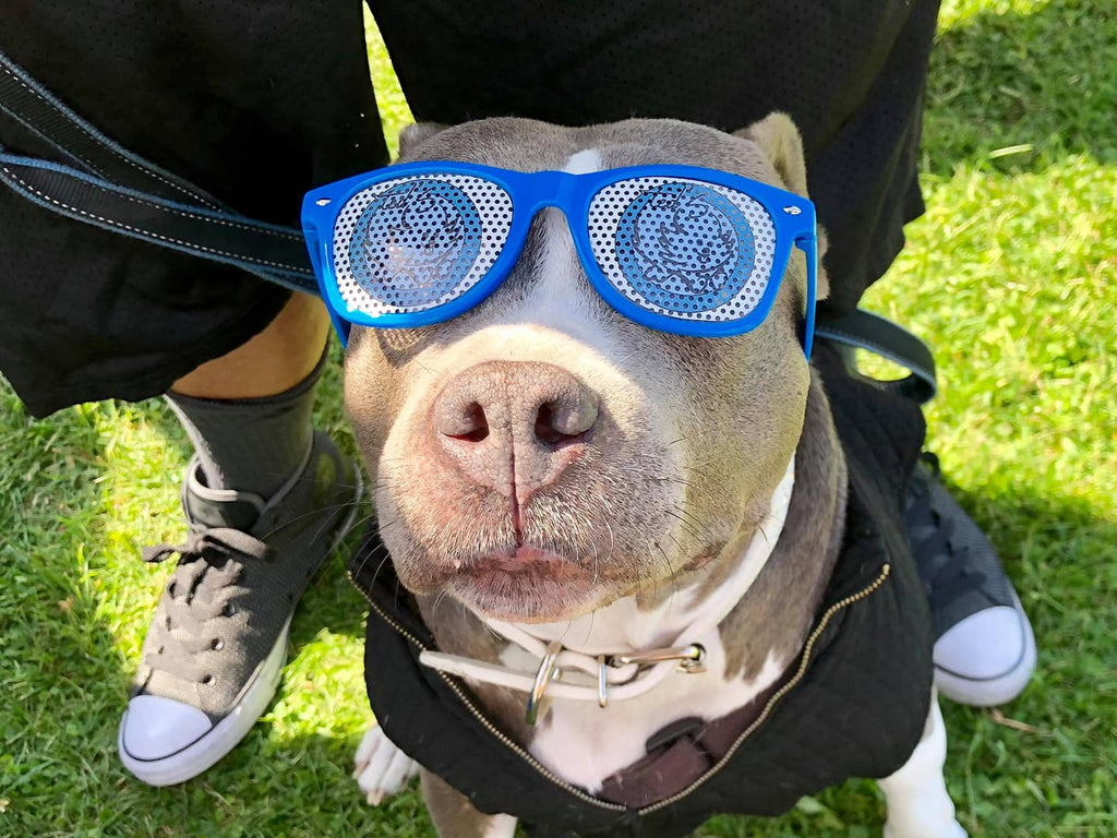 Pitties are so cool