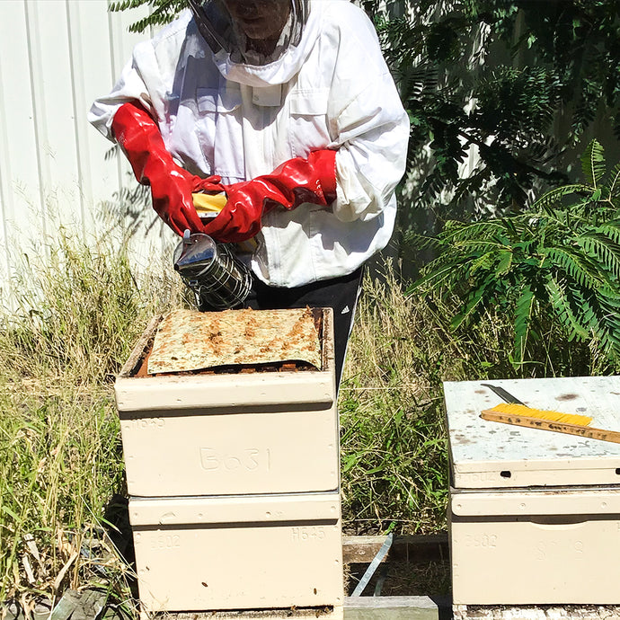 A day in the life of a Saleview Estate  beekeeper