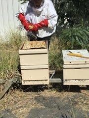 beekeeper-smoking-hive-saleview-estate