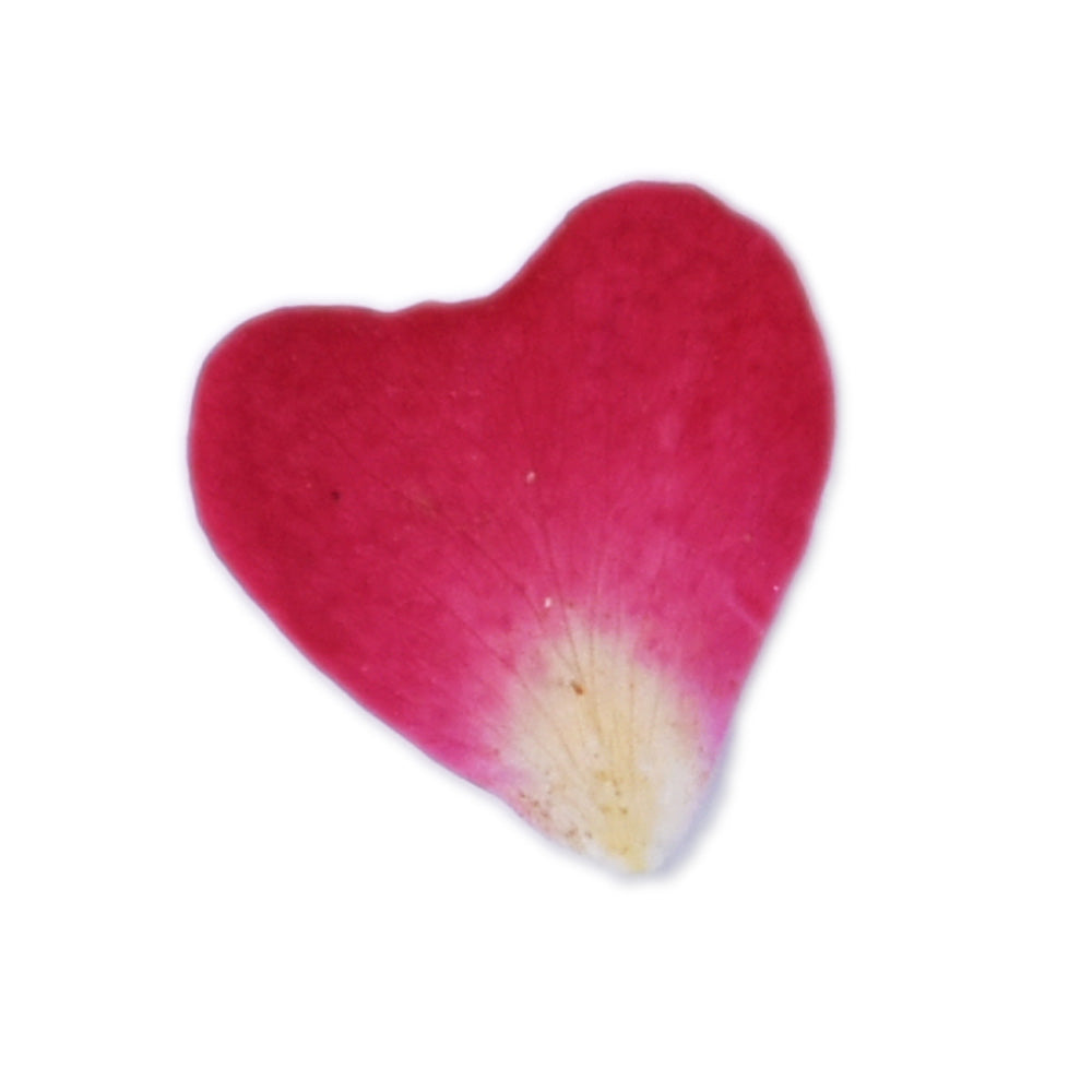 20pcs Heart shaped rose petal Real Pressed Flowers dried pressed flower