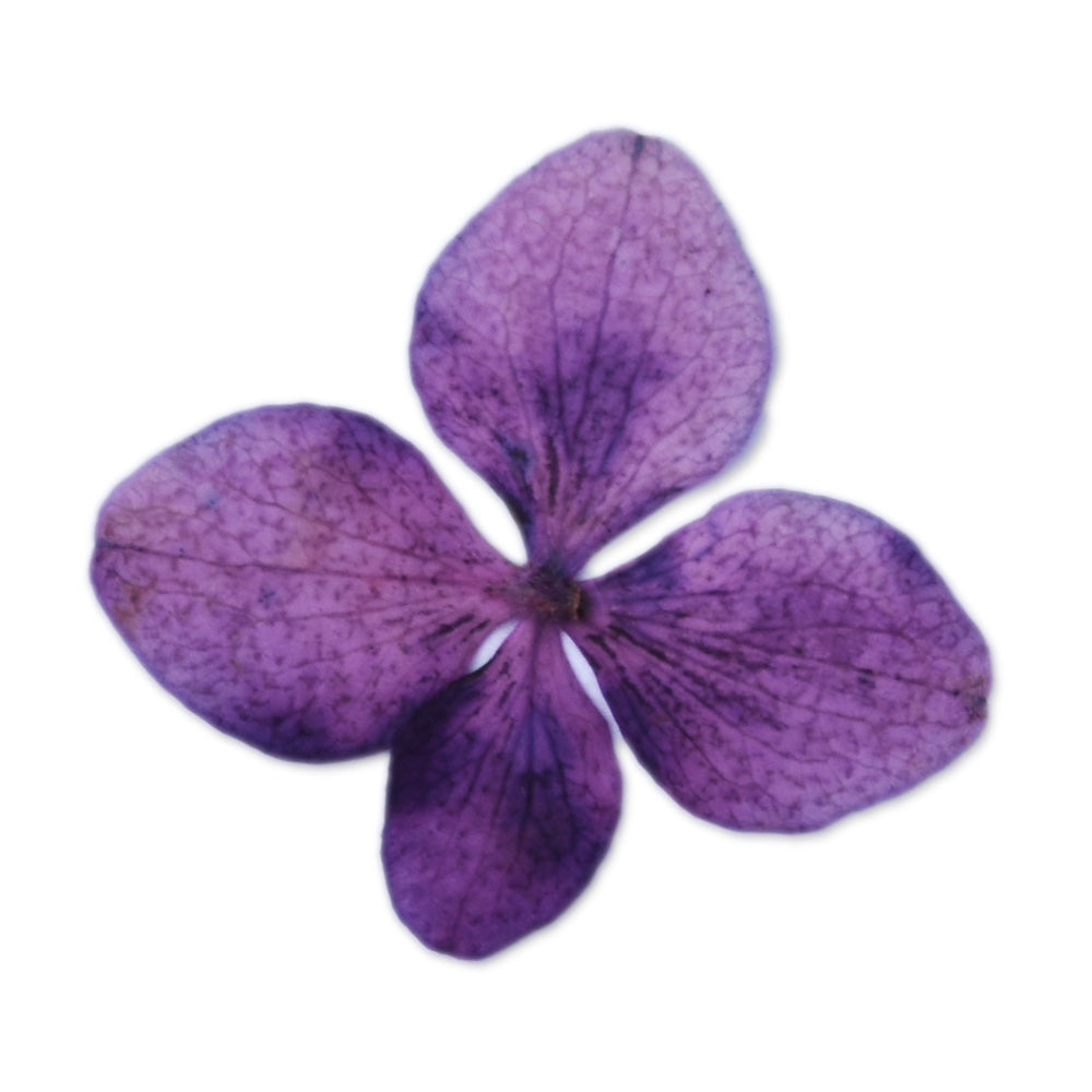 12pcs Dried Real Pressed Flower Stickers dyed pressed flower for phone case,paper goods