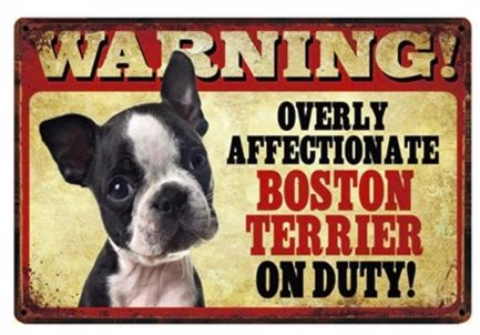 Image of a tin poster with a cute Boston Terrier puppy and text which warns visitors about an overly affectionate boston terrier on the prowl