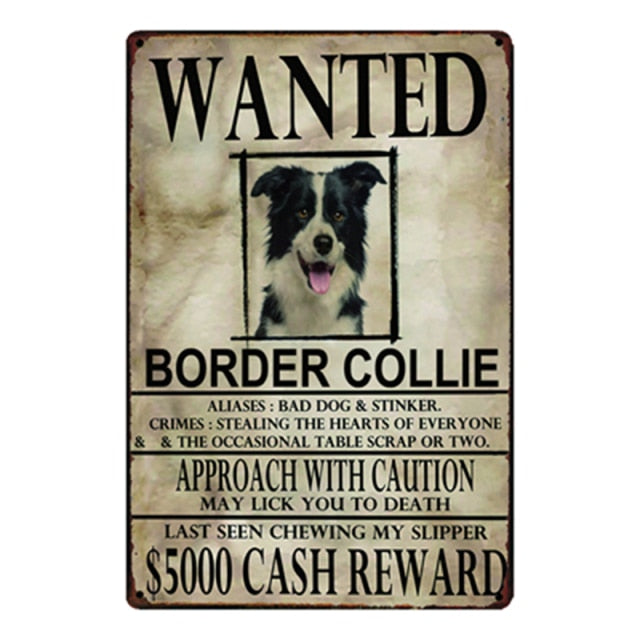 Wanted Border Collie Approach With Caution Tin Poster - Series 1