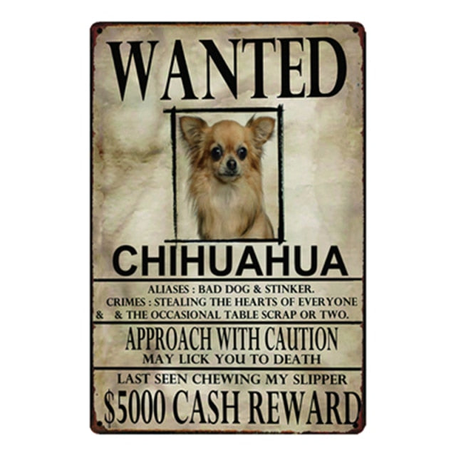 Wanted Chihuahua Approach With Caution Tin Poster - Series 1