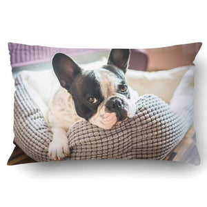 Queen Size Large Curious Pug Cushion Cover - Series 1Cushion CoverFrench Bulldog - Pied Black and WhiteOne Size