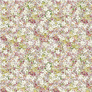 Michael Miller Fabrics Songs of the Flower Fairies Petite Princess DDC-9276-CREM-D