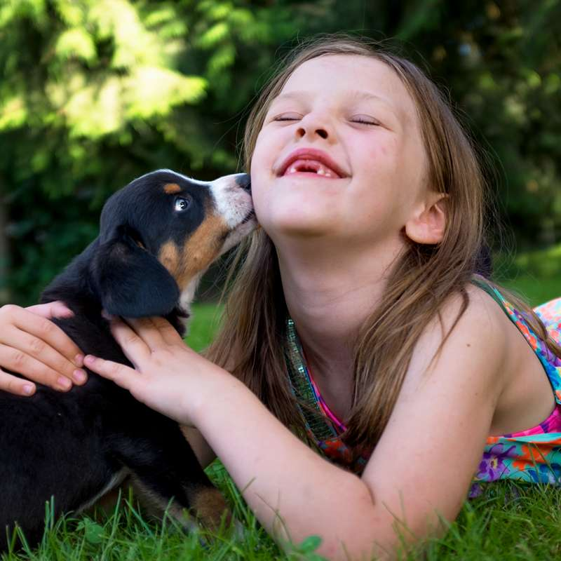 Young girl with Entlebucher Mountain Dog outdoors.