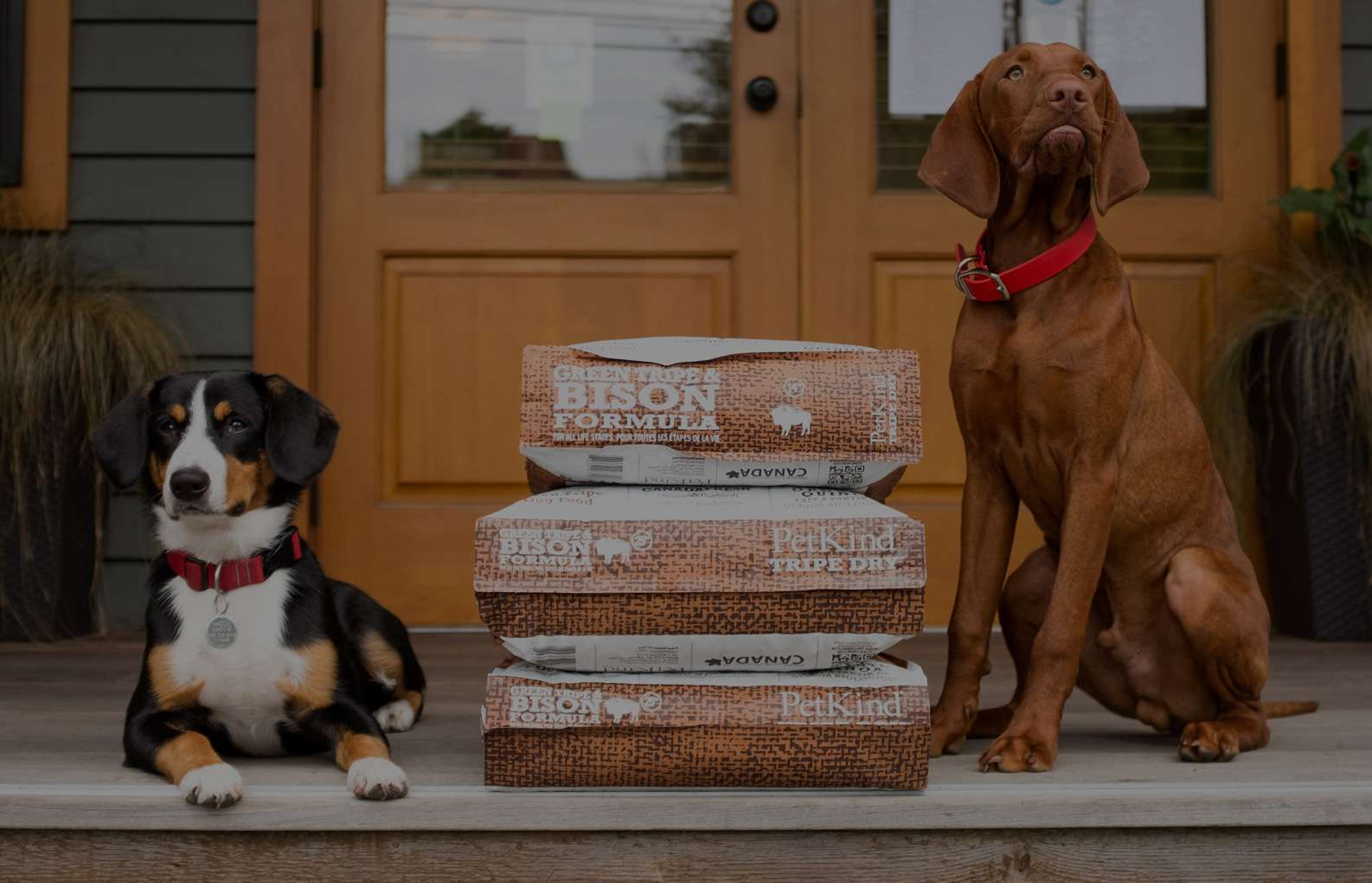 Vizsla and Entlebucher Mountain Dog sitting on a porch/deck with stacked bags of Tripe Dry Bison Formula.
