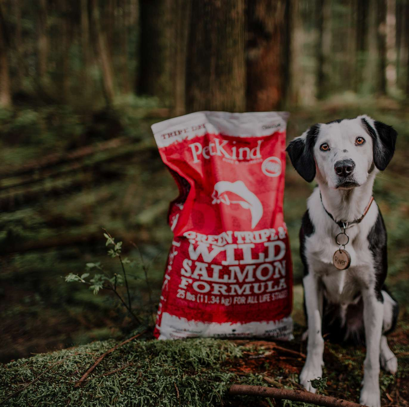 Border Collie and Labrador Retriever in a forest with PetKind Tripe Dry Green Tripe and Wild Salmon formula.