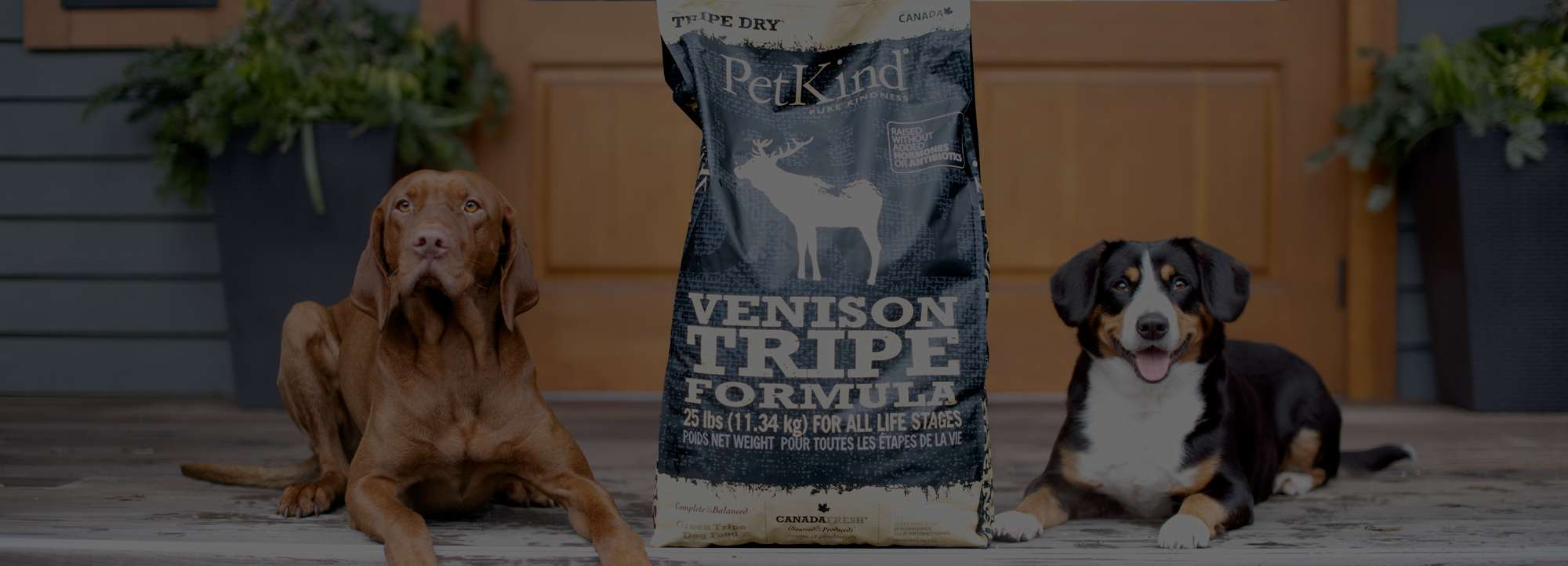 Vizsla and Entlebucher Mountain Dog sitting on the porch with a 25 lb bag of Tripe Dry Venison Tripe formula.