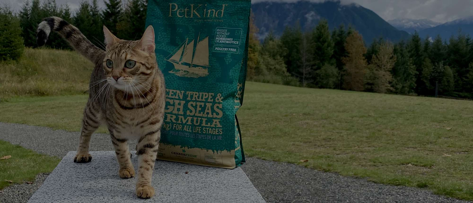Bengal Cat outdoors with an 11 lb bag of Tripe Dry Green Tripe and High Seas formula.