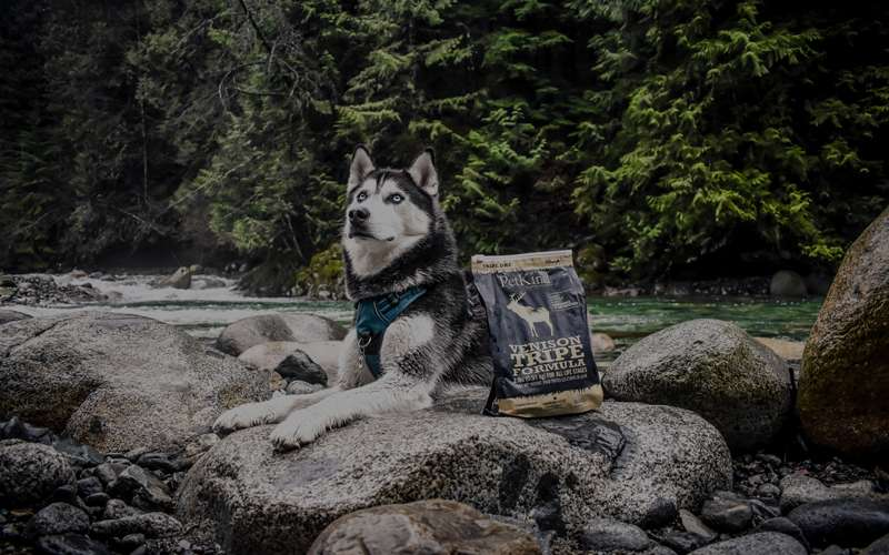 Husky sitting besides a river with a 2lb bag of Tripe Dry Venison Tripe formula.