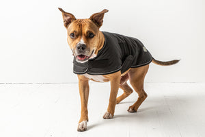 SALE 20% OFF - GF Pet - Blanket Jacket