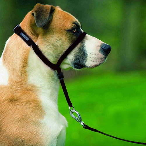 PetSafe - Easy Walk Head Collar