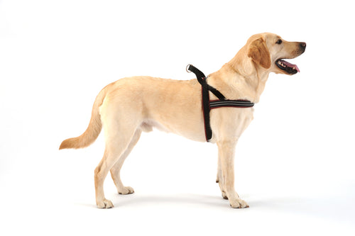 Comfort Flex Harness - Made in USA