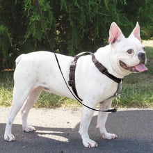 Load image into Gallery viewer, PetSafe - 3 in 1 Harness